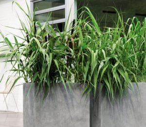 Bambus Kübel