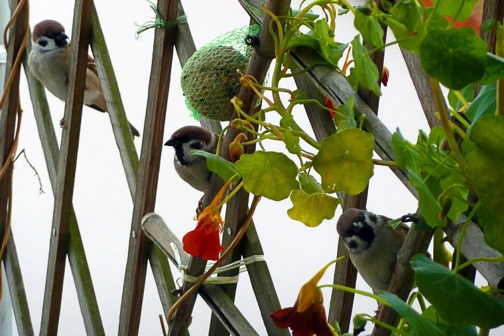 Pflanzen als natürlicher Sichtschutz auf dem Balkon - Sichtschutz Balkon